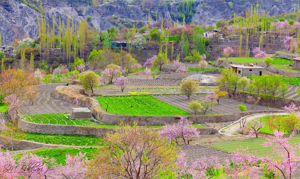 hunza-valley-tour-packages-